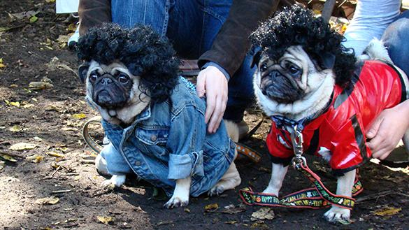 Tompkins Square Dog Walk Halloween Parade New York City